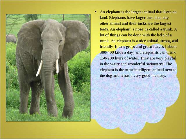 An elephant is the largest animal that lives on land. Elephants have larger...