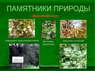 «Казачий сад» Боярышник перистонадрезанный Жимолость Маака Диоскорея ниппонск