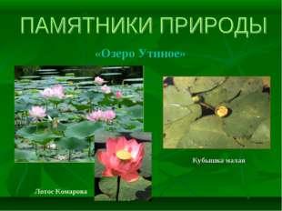 «Озеро Утиное» Кубышка малая Лотос Комарова