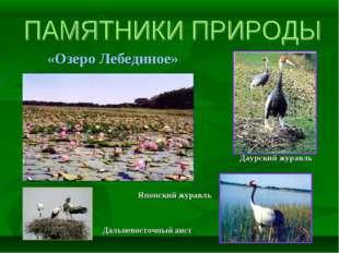 «Озеро Лебединое» Дальневосточный аист Японский журавль Даурский журавль