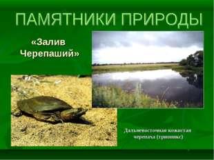 «Залив Черепаший» Дальневосточная кожистая черепаха (трионикс)