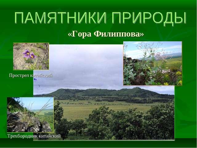 «Гора Филиппова» Прострел китайский Трехбородник китайский