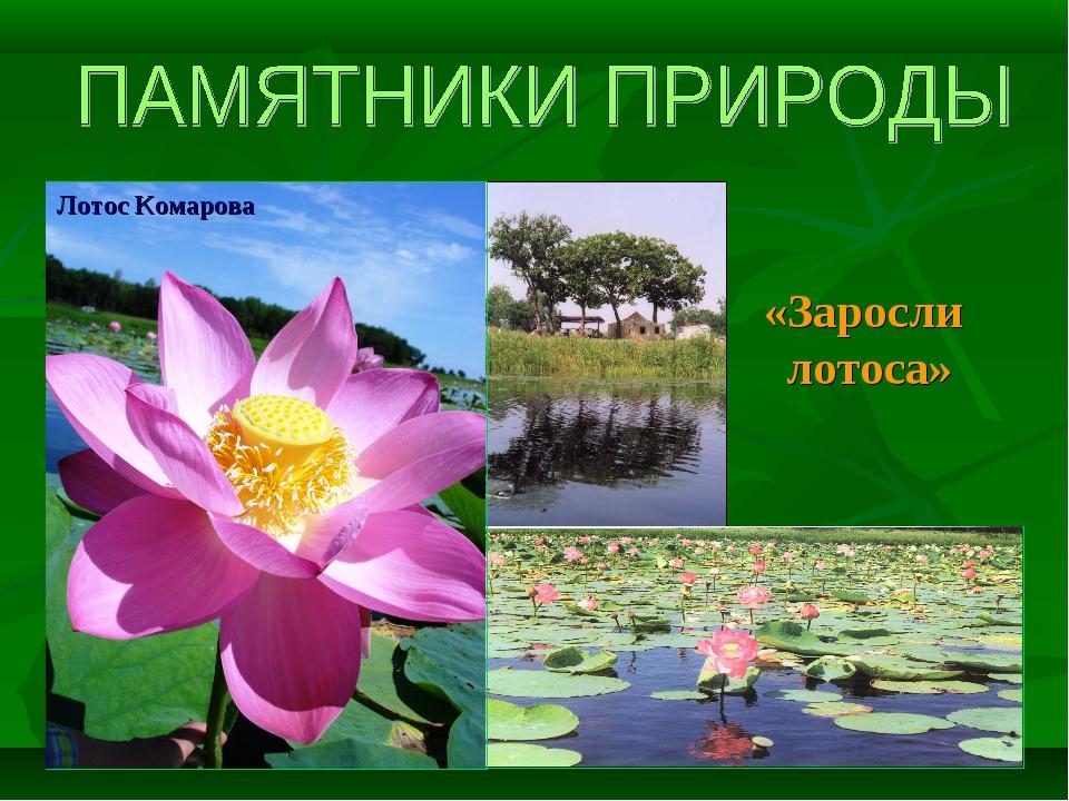 «Заросли лотоса» Лотос Комарова