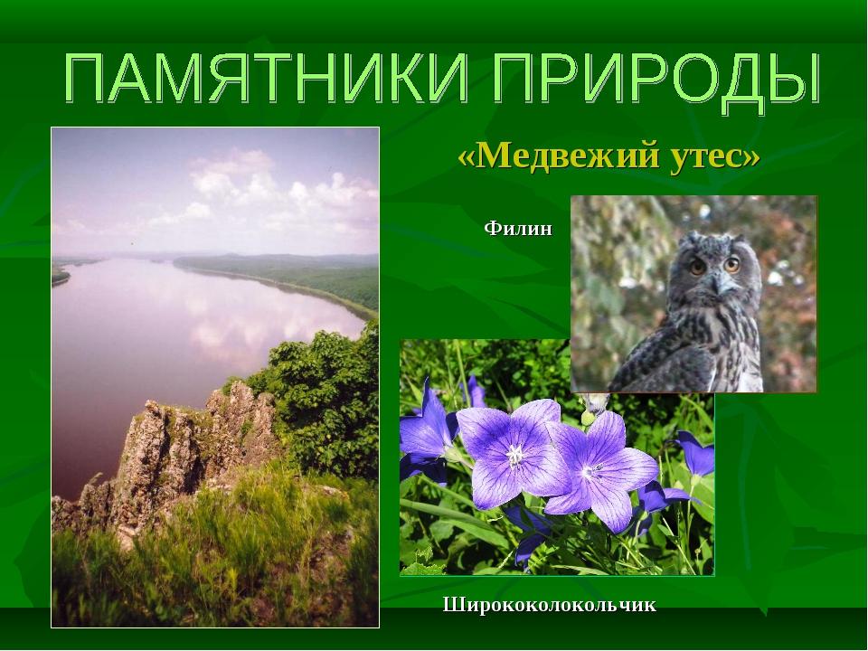 «Медвежий утес» Филин Ширококолокольчик