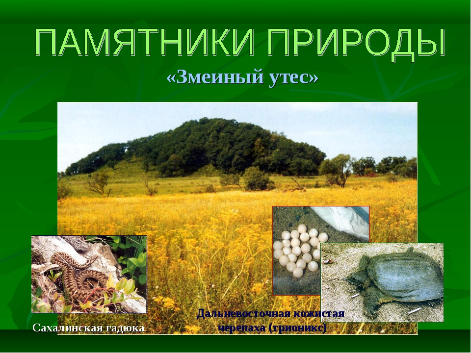 «Змеиный утес» Сахалинская гадюка Дальневосточная кожистая черепаха (трионикс)