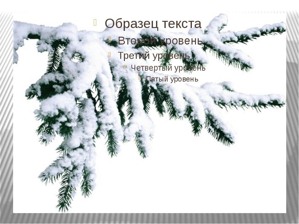 Снежные ветки