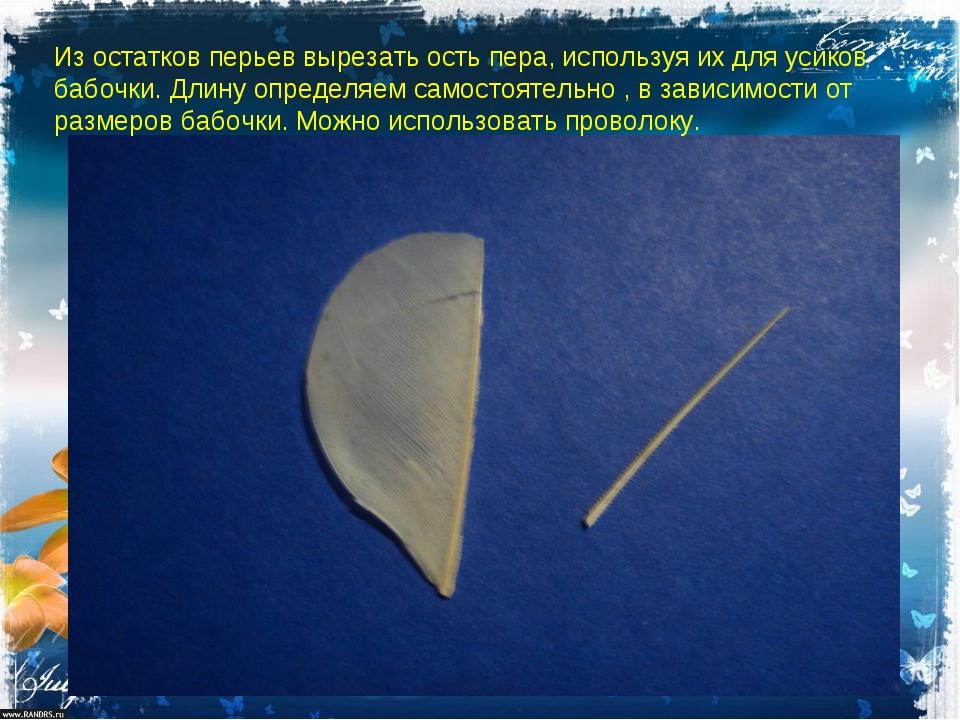 Из остатков перьев вырезать ость пера, используя их для усиков бабочки. Длину...