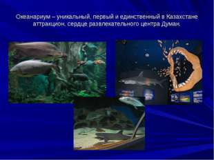 Океанариум – уникальный, первый и единственный в Казахстане аттракцион, сердц