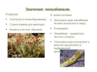 Значение лишайников. В природе: Участвуют в почвообразовании; Служат кормом д
