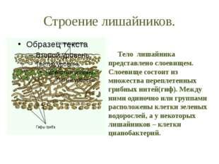 Строение лишайников. Тело лишайника представлено слоевищем. Слоевище состоит