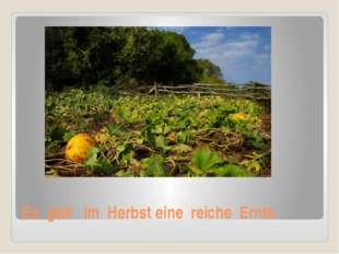Es gibt im Herbst eine reiche Ernte.