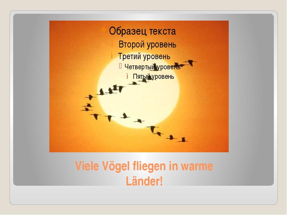 Viele Vögel fliegen in warme Länder!
