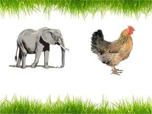 an elephant a hen
