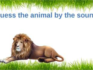Guess the animal by the sound A lion