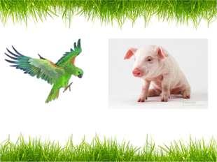 a parrot a pig