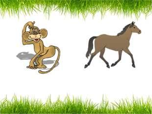 a monkey a horse