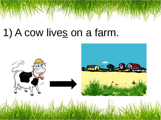 1) A cow lives on a farm.