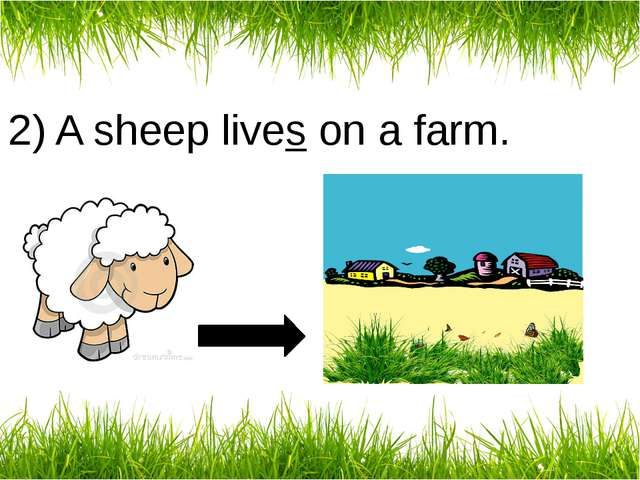 2) A sheep lives on a farm.