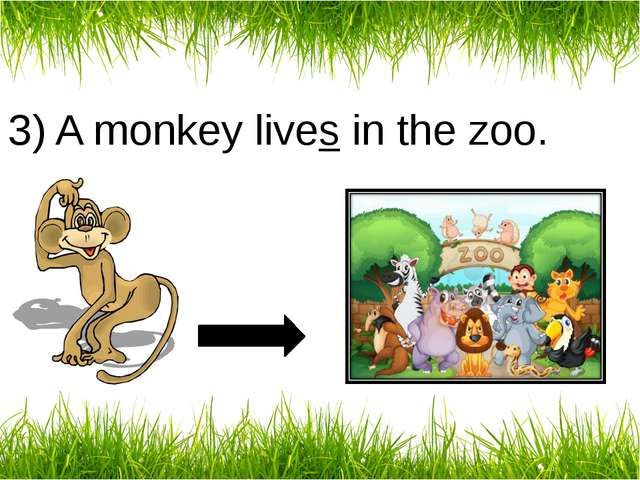 3) A monkey lives in the zoo.