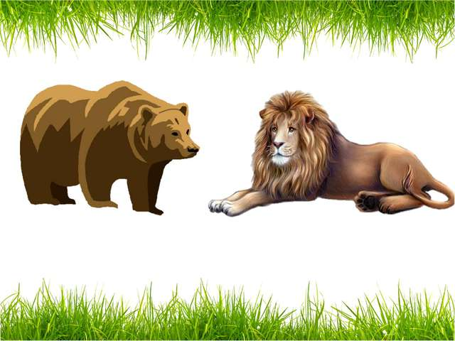 a bear a lion