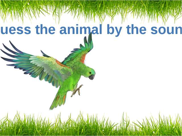 Guess the animal by the sound A parrot