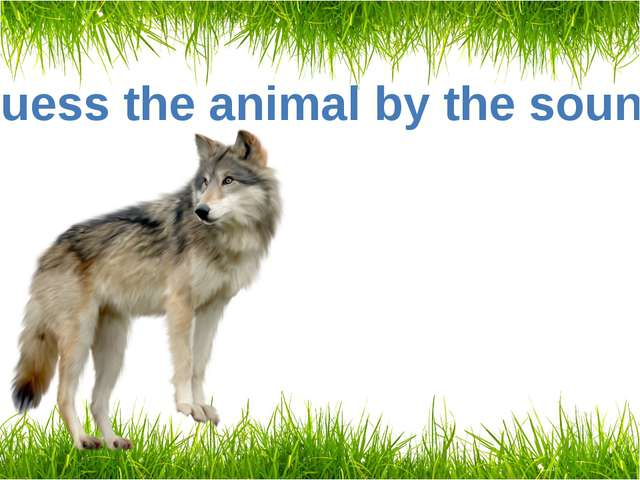 Guess the animal by the sound A wolf