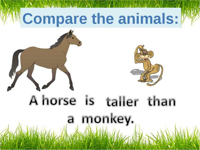 Compare the animals: tall