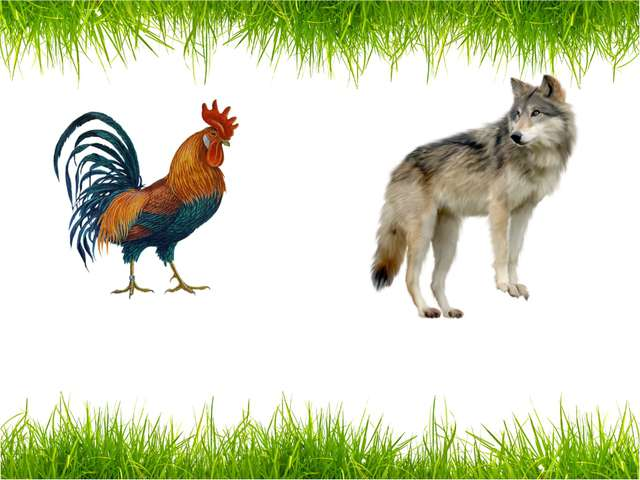 a cockerel a wolf