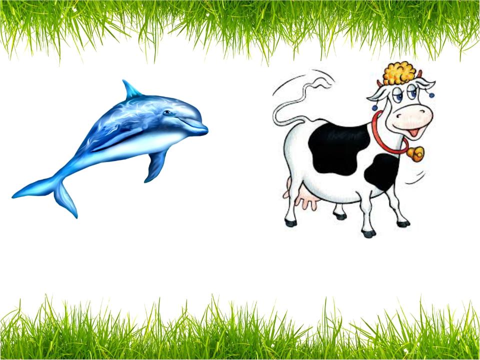 a dolphin a cow