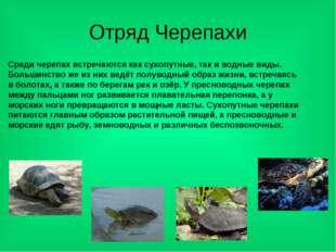 Отряд Черепахи Среди черепах встречаются как сухопутные, так и водные виды. Б