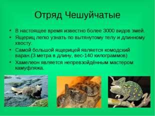 Отряд Чешуйчатые В настоящее время известно более 3000 видов змей. Ящериц лег