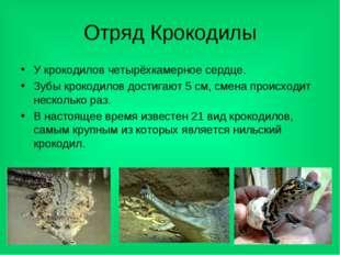 Отряд Крокодилы У крокодилов четырёхкамерное сердце. Зубы крокодилов достигаю