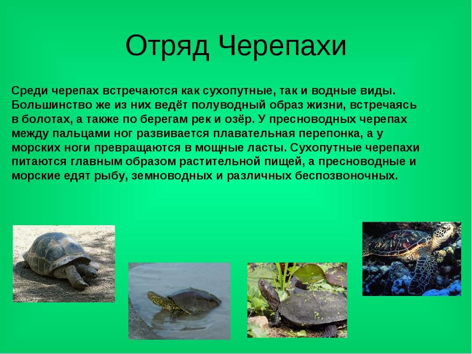 Отряд Черепахи Среди черепах встречаются как сухопутные, так и водные виды. Б...