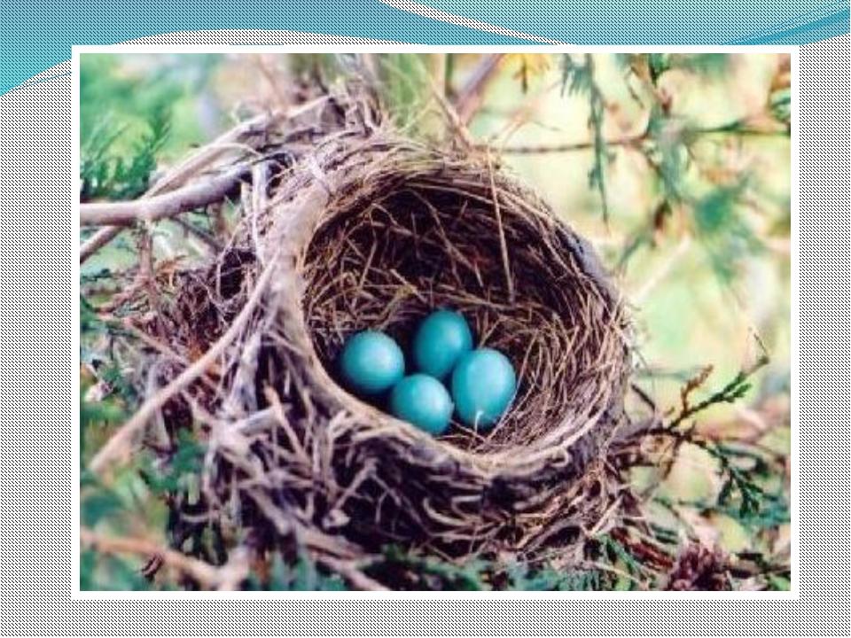 Гнезда птиц своими руками