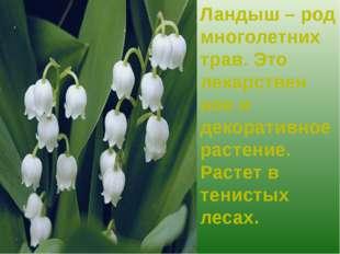 Ландыш – род многолетних трав. Это лекарствен ное и декоративное растение. Ра