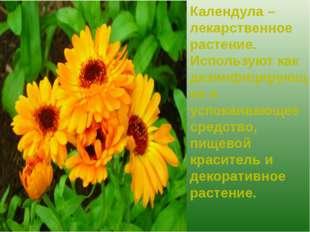 Календула – лекарственное растение. Используют как дезинфицирующее и успокаив