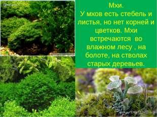 Мхи. У мхов есть стебель и листья, но нет корней и цветков. Мхи встречаются в