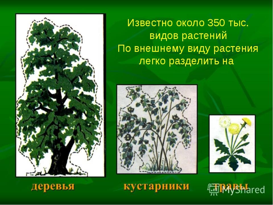 Известно около 350 тыс. видов растений По внешнему виду растения легко раздел...