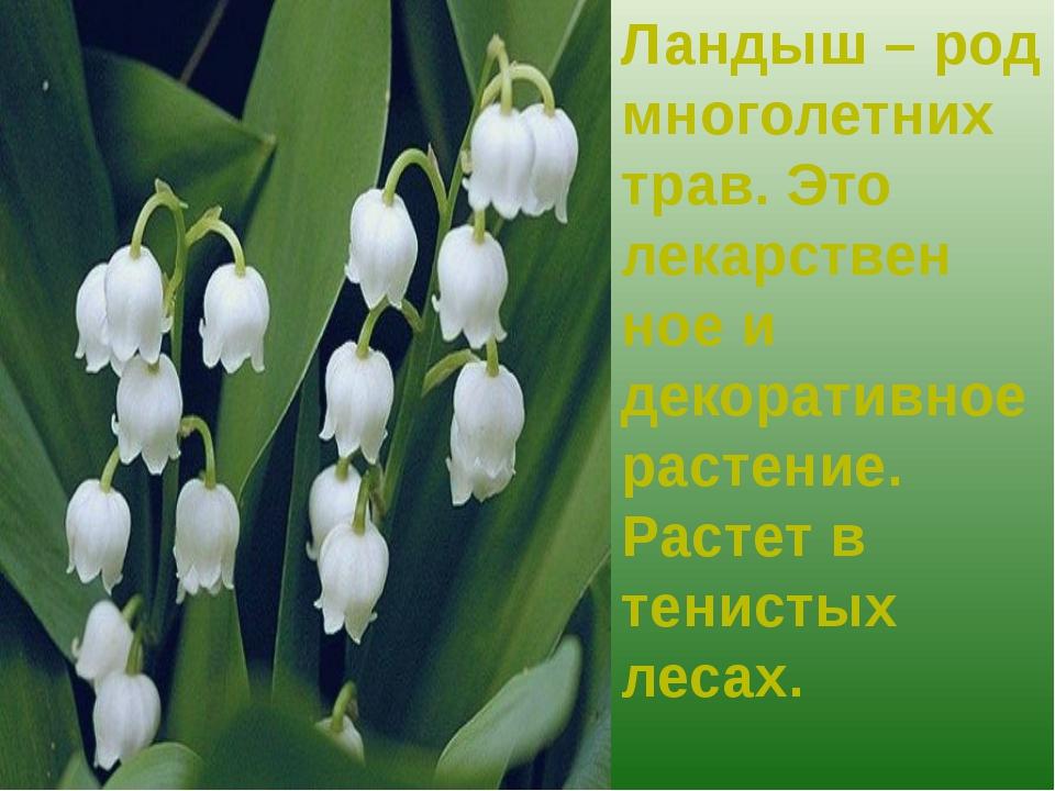 Ландыш – род многолетних трав. Это лекарствен ное и декоративное растение. Ра...