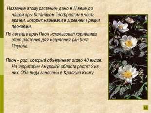 Название этому растению дано в III веке до нашей эры ботаником Теофрастом в