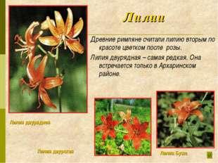 Лилии Древние римляне считали лилию вторым по красоте цветком после розы. Ли