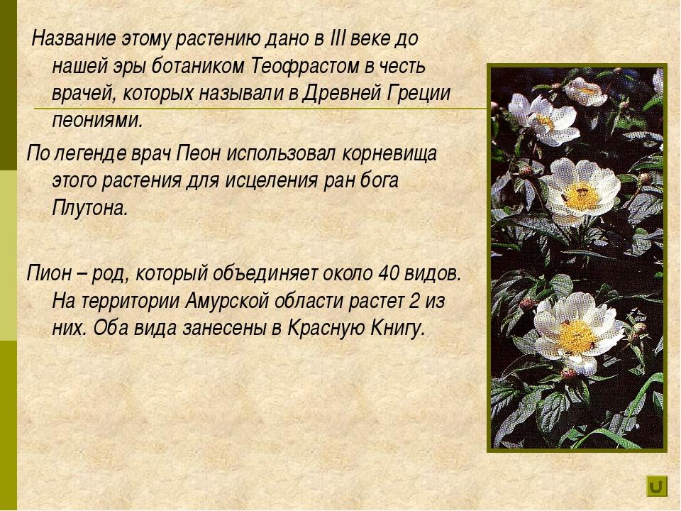 Название этому растению дано в III веке до нашей эры ботаником Теофрастом в...