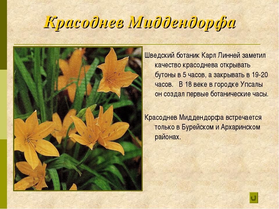Красоднев Миддендорфа Шведский ботаник Карл Линней заметил качество красоднев...