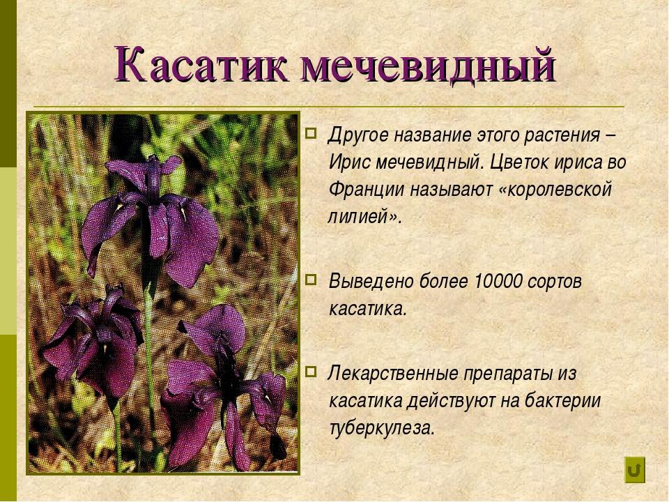 Касатик мечевидный Другое название этого растения – Ирис мечевидный. Цветок и...