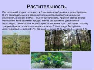 Растительность. Растительный покров отличается большим своеобразием и разнооб