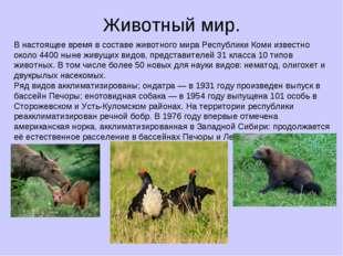 Животный мир. В настоящее время в составе животного мира Республики Коми изве