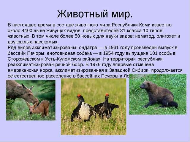 Животный мир. В настоящее время в составе животного мира Республики Коми изве...