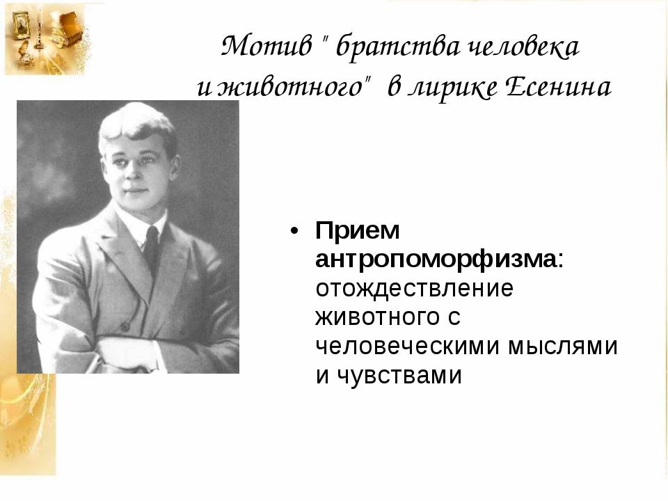 """Мотив """" братства человека и животного"""" в лирике Есенина Прием антропоморфизма..."""