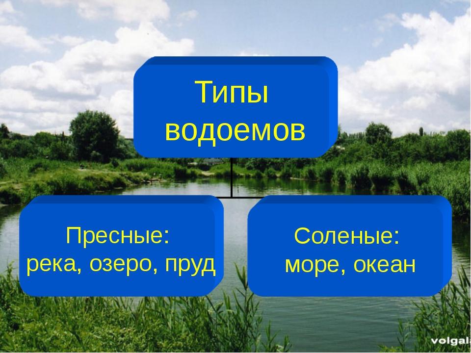 Типы водоемов Пресные: река, озеро, пруд Соленые: море, океан