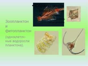 Зоопланктон и фитопланктон (одноклеточ-ные водоросли планктона).